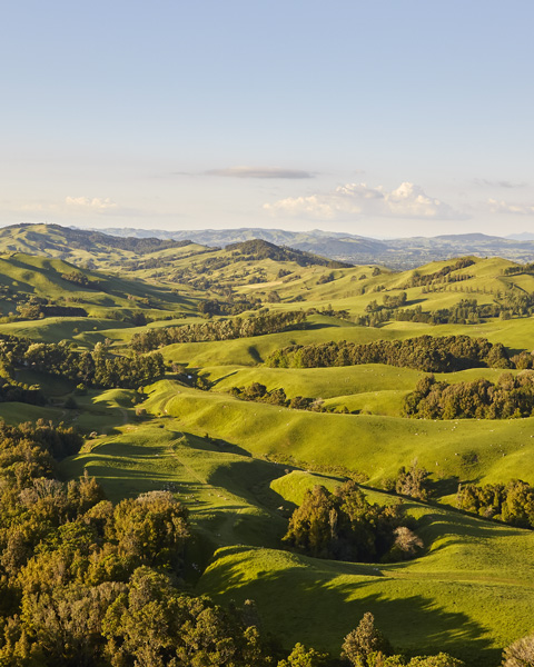 Sustainability benefits New Zealand grass-fed beef lamb 2