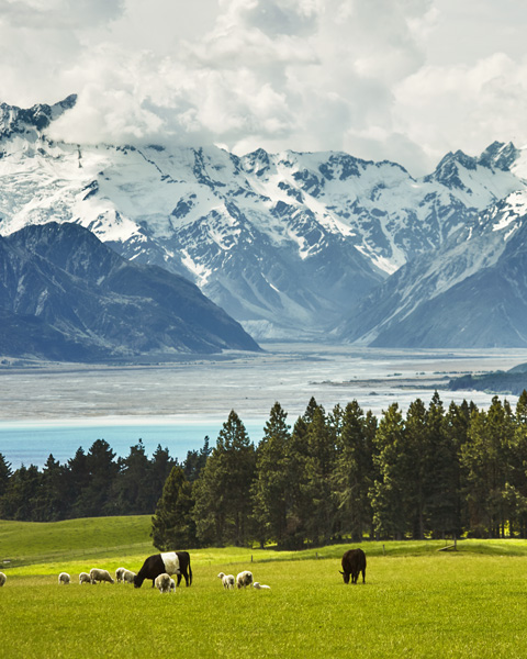 Sustainability benefits New Zealand grass-fed beef lamb 3