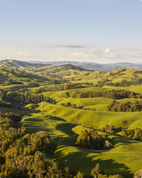 A sequestered approach for New Zealand grass-fed beef and lamb