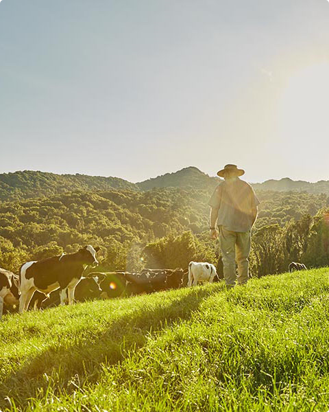 The better taste of New Zealand grass-fed beef and lamb