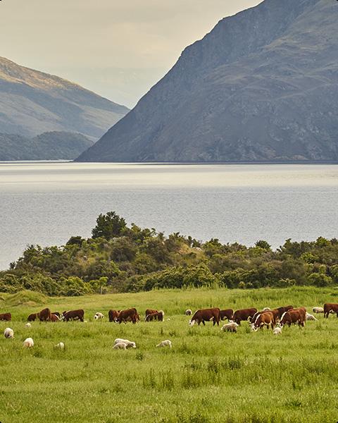 New Zealand has healthy, happy animals