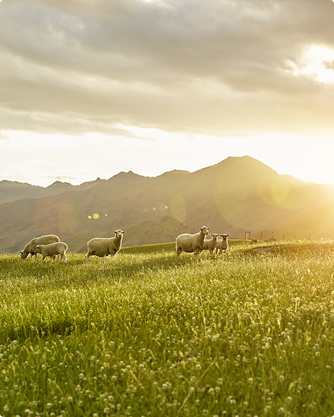 In New Zealand, grass-fed beef and lamb means more