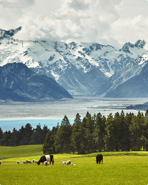 Reducing carbon emissions in New Zealand for grass-fed beef and lamb